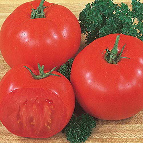 Burpee 'Super Beefsteak' | Red Beefsteak Slicing Tomato | 175 - Burpee Tomato Seed