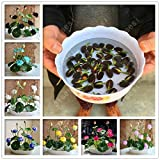 Trending Arrow Bonsai Lotus Flower for Summer 100% Real Bowl Lotus Pots Bonsai Garden Plants 05 Seed/Bag (Mix)