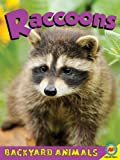 Raccoons, Jennifer Hurtig, 1619130696