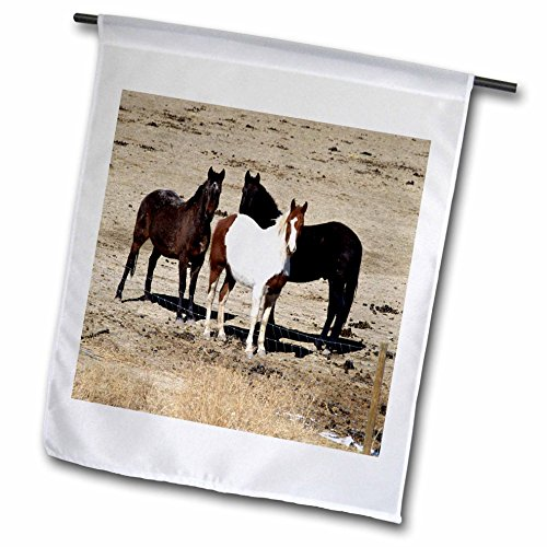 3dRose TDSwhite – Horse Equine Photos - Pasture Trio Three Horses - 12 x 18 inch Garden Flag ()