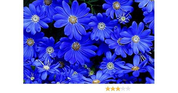 environ 100 graines 5488 Arbustes Mélange halbhoher variétés pluriannuelle arbustes