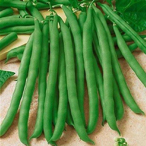 - David's Garden Seeds Bean Bush Commodore Improved 7984 (Green) 100 Non-GMO, Heirloom Seeds