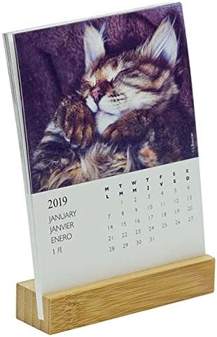 Draeger 77005123 calendario sobre base Gatos 2019: Amazon.es: Oficina y papelería