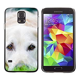Vortex Accessory Carcasa Protectora Para SAMSUNG GALAXY S5 V G9000 - Labrador Retriever White Dog Puppy -