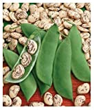 buy David's Garden Seeds Bean Lima Jackson Wonder SL0006 (Green) 100 Non-GMO, Heirloom Seeds now, new 2020-2019 bestseller, review and Photo, best price $7.95
