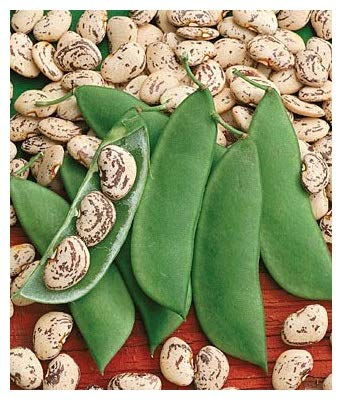 - David's Garden Seeds Bean Lima Jackson Wonder SL0006 (Green) 100 Non-GMO, Heirloom Seeds