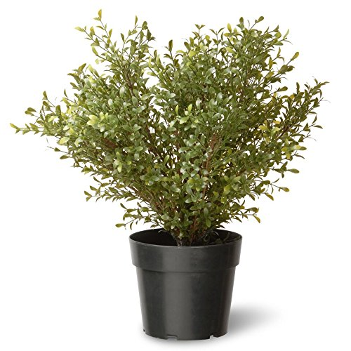 - National Tree 24 Inch Argentea Plant in Round Green Plastic Pot (LAR4-700-24-1)
