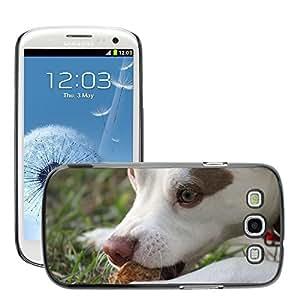 Just Phone Cases Etui Housse Coque de Protection Cover Rigide pour // M00127376 Pet Puppy Dog Face Animal lindo de la // Samsung Galaxy S3 S III SIII i9300