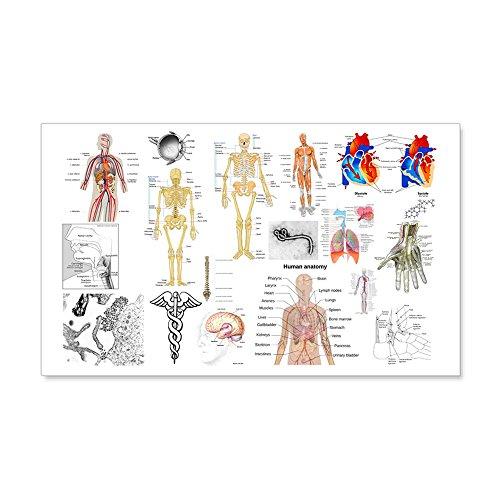 CafePress Human Anatomy Charts Wall Decal - 20x12 Wall Decal, Vinyl Wall Peel, Reusable Wall Cling by CafePress