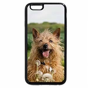 iPhone 6S / iPhone 6 Case (Black) Dog