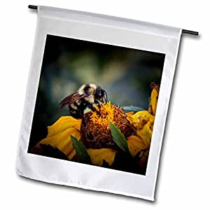 Angel Wings Designs General Wildlife - Birds - Wild Flower with Bumble Bee Helping one another - close up image with detail for Home Décor - 18 x 27 inch Garden Flag (fl_48668_2)