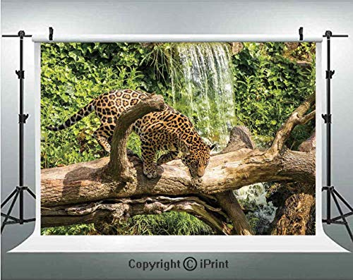 Safari Decor Photography Backdrops Jaguar cat on a Tree Trunk Waterfall in the Backbround Endangered Species Wild Life Fast Animal,Birthday Party Background Customized Microfiber Photo Studio Props,7x
