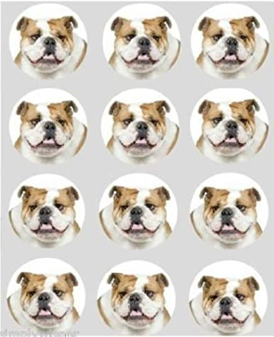 12 Bulldog Dog Design Rice Paper Fairy Cup Cake 40mm Toppers Pre