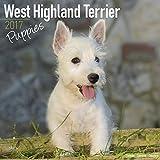 West Highland Terrier Puppies Calendar 2017 - Westie Puppies - Dog Breed Calendars - 2016 - 2017 wall calendars - 16 Month Calendar by Avonside