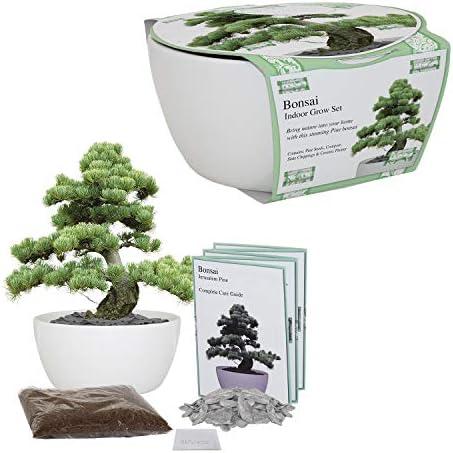 Bonsai Indoor Grow Kit - Anzuchtset