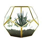 Glass Terrarium Brass Pentagon Regular Dodecahedron Geometric Container, LoveNite Sphere Terrarium Desktop Planter for Succulent Fern Moss Air Plants (Gold)