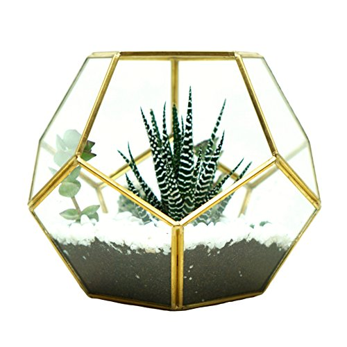 Glass Terrarium Brass Pentagon Regular Dodecahedron Geometric Container, LoveNite Sphere Terrarium Desktop Planter for Succulent Fern Moss Air Plants (Gold) (Brass Terrarium)
