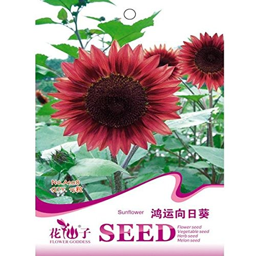 Sunflower Sowing Seeds (15pcs Red Sunflower Seeds Garden Courtyard Annual Herb Plant / 15pcs Red Sunflower Seeds Garden Courtyard Annual Herb Plant . . : . Scientific name: Helianthus annuus . . Sowing time: Marc)