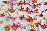 Edible Flowers Micro Orchid 100 Count