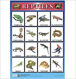 List Of Reptiles For Kids | Kids Matttroy