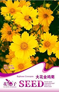 Coreopsis Seed 50 Perennial Big Flower Coreopsis Seed Bright Yellow HOT A187 By Mikedaoer