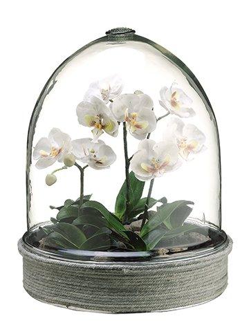 15 Phalaenopsis Orchid Plant In Glass Terrarium White Amazon Co Uk