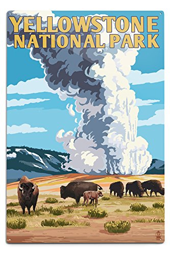 Lantern Press Yellowstone National Park, Wyoming - Old Faithful Geyser and Bison Herd (12x18 Aluminum Wall Sign, Wall Decor Ready to Hang)