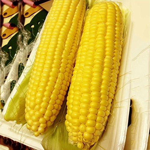 Hanbaili 2 Pack Premium Super Sweet Corn Seeds for Home Garden Planting Outdoor,Easy Grow ()