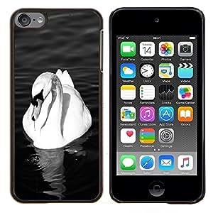 Jordan Colourful Shop - Swan White Beautiful Bird Pond Ornithology For Apple iPod Touch 6 6th Generation Personalizado negro cubierta de la caja de pl????stico