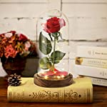Beauty-and-the-Beast-Rose-Red-Silk-Rose-in-Glass-Dome-Fallen-Petals-and-Wood-Base-in-a-Glass-Dome-Flower-Garland-for-Decoration-Best-Gift-for-Her-on-Valentines-Day-Anniversary-Mothers-Day-Gifts
