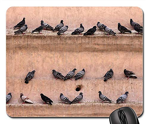 Mouse Pads - Pigeons Wall Gathered Bird Lines Castle Fortress