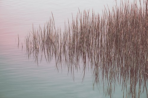 Marsh Grass - Reflection Pond - Photography Print - Abstract Fine Art - Nature - New England Photography - Sunset - Water - Home Decor by Leslie Brienza Fine Art and Still Life