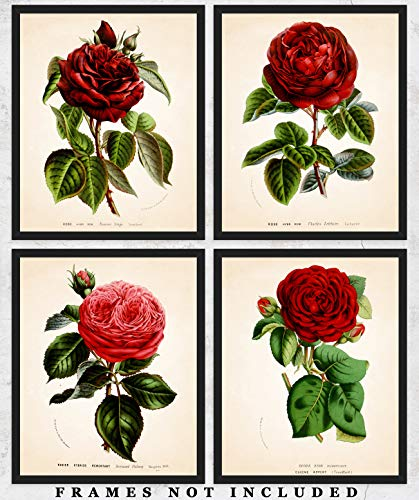 Vintage Rose Botanical Wall Art Prints: Unique Room Decor for Boys, Girls, Men & Women - Set of Four (8x10) Unframed Picture - Great Gift Idea ()