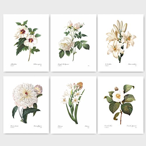 (Set of 6) Botanical Prints, Redoute Flower Wall Art (White Room Decor) Camellia Peony, Rose Hibiscus, Lily – Unframed
