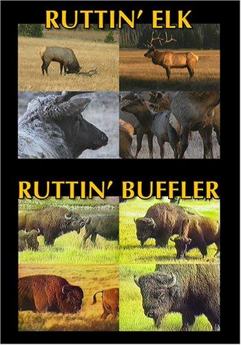 RUTTIN' ELK, RUTTIN' BUFFLER