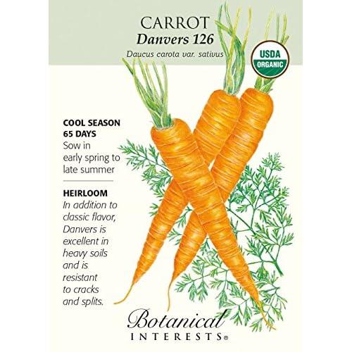 Hot 'Danvers 126' Carrot Seeds - 1 gram - Organic supplier