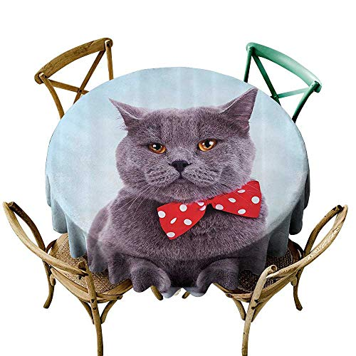 Round Outdoor Tablecloth Cat Decor Tuxedo Gray Scottish Fold Theme with Red White Polka Dots Tie Bow Baby Blue Fun Party Decorations Table Cover Cloth 63 INCH Sky Blue Dimgrey ()
