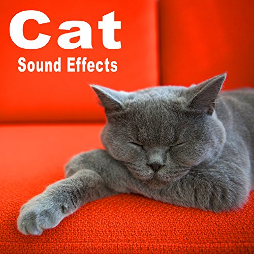 - Cat Sound Effects