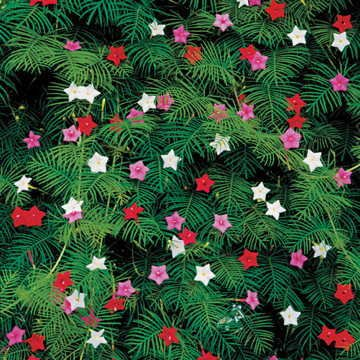 Park Seed Cypress Vine Mix Seeds