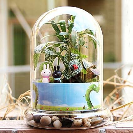 [Envio Gratis] DIY Moss Micro paisaje botella de cristal plantas suculentas en forma de