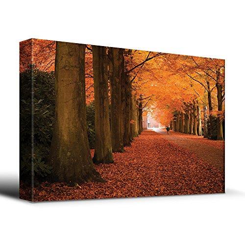 Autumn orange leaved trees line path