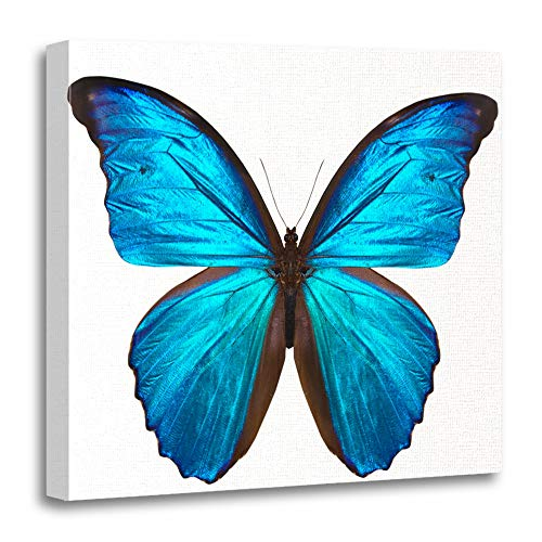 Emvency Canvas Prints Square 20x20 Inches Blue Flower Beautiful Butterfly White Pink Black Wing Biology Abstract Bug Small Decoration Wooden Frame Pictures Framed Wall Decor -