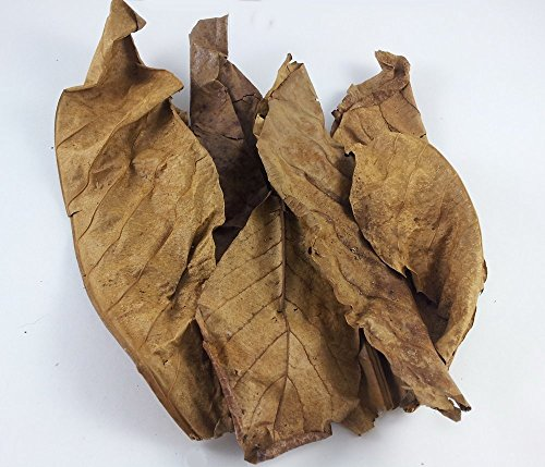 SunGrow 10 Giant Catappa Leaves For Soft Water Live Fish Betta Discus Arowana Breeding Aquarium Aquatic Tank