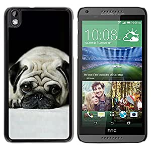 Qstar Arte & diseño plástico duro Fundas Cover Cubre Hard Case Cover para HTC DESIRE 816 ( Pug Dog Small Shorthair Big Brown Eyes)