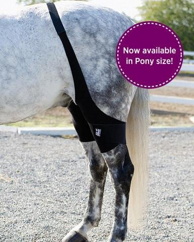 Ice Horse Pony Size Pair Stifle Wrap for Equine Therapy - Comes with 4 Ice Packs by Ice Horse