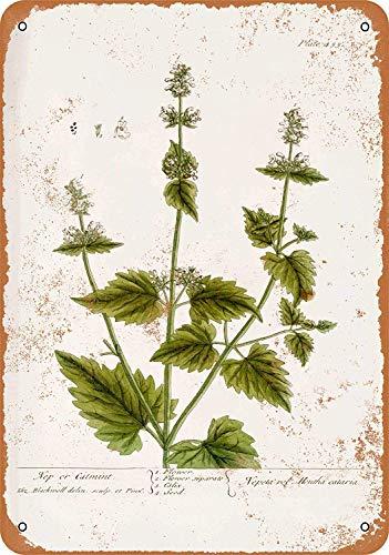 SRongmao 12 x 16 Metal Sign - Vintage Look 1737 Catnip Botany Plate