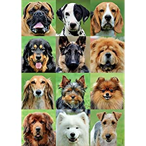 Educa Borras 500 Collage Cani Puzzle Multicolore 17963