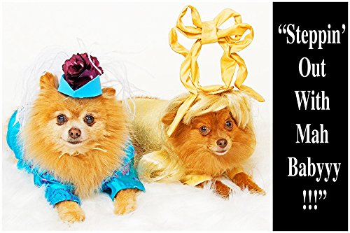 [STEPPIN' OUT, 1 Large, funny fridge magnet, 4x6 inches (10.16 x 15.24 cm), meme decorative magnetic sign plaque, Pomeranian pet couple in dog costumes goes out dancing together] (Nerd Costume Offensive)
