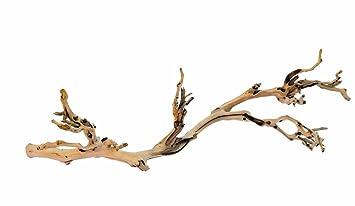 amazon com exo terra forest branch large pet terrariums pet