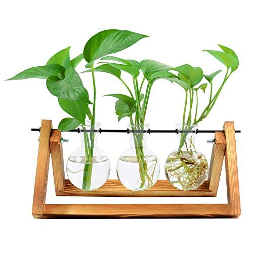 - Bulb Glass Planter, Vase Terrarium Hydroponics Desktop Planter Vase Holder with Wooden Stand and Metal Swivel Holder for Home Garden Office Decoration - 3 Bulb Vase
